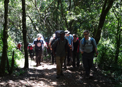 Kilimanjaro_forest
