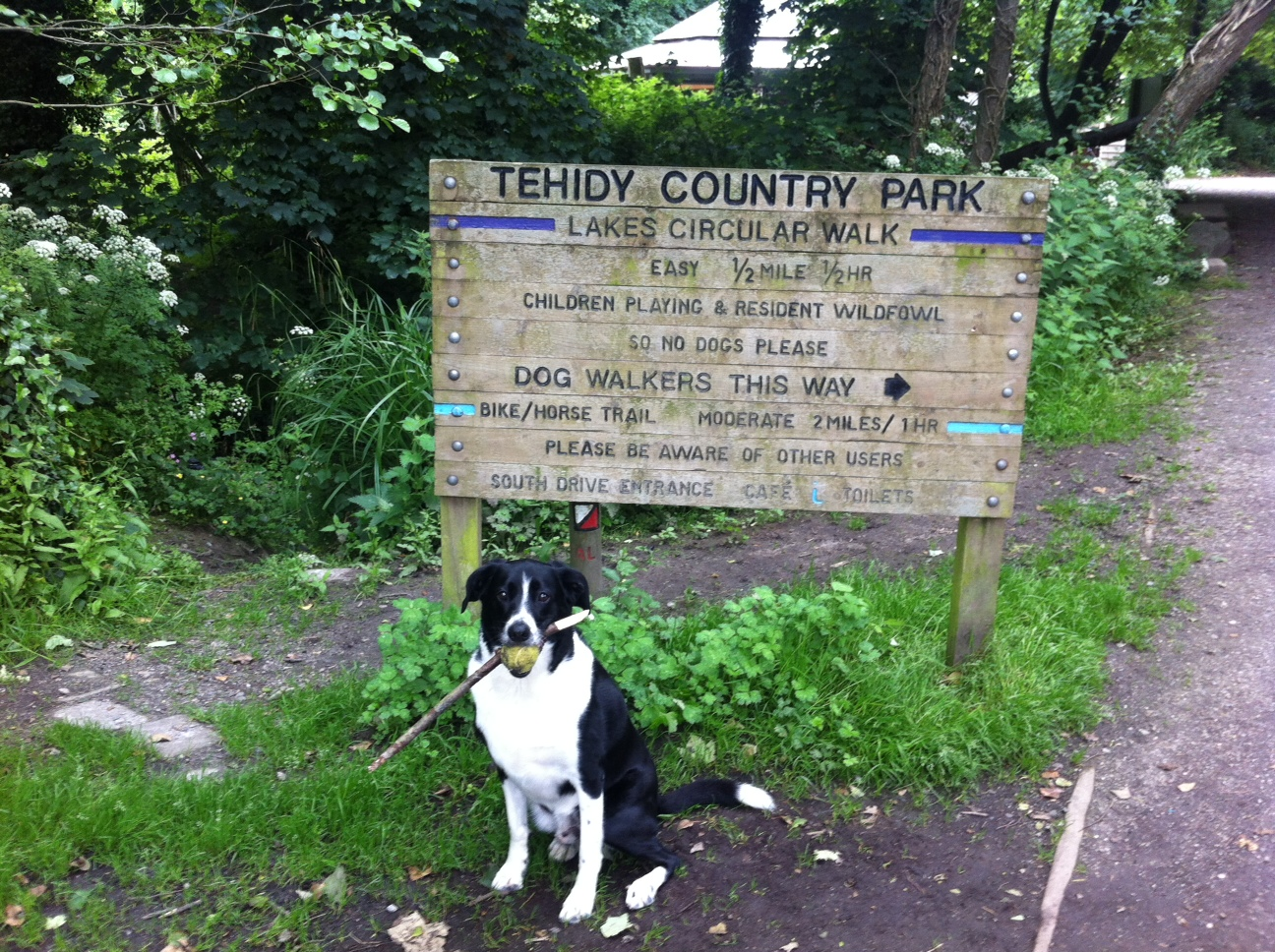 Lex's adventure to Tehidy Woods!