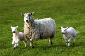 Top Farms to Visit in the UK